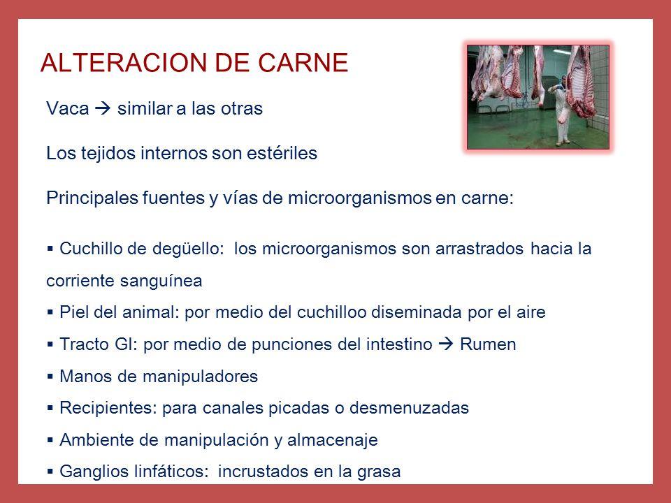 ALTERACION DE CARNE Vaca  similar a las otras