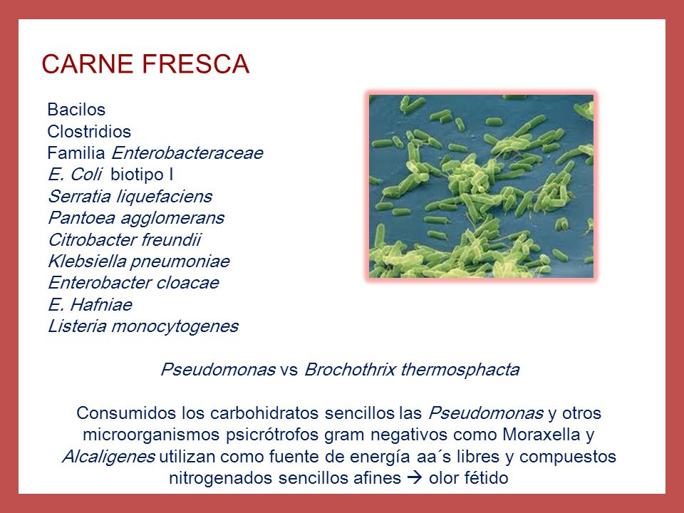 Pseudomonas vs Brochothrix thermosphacta