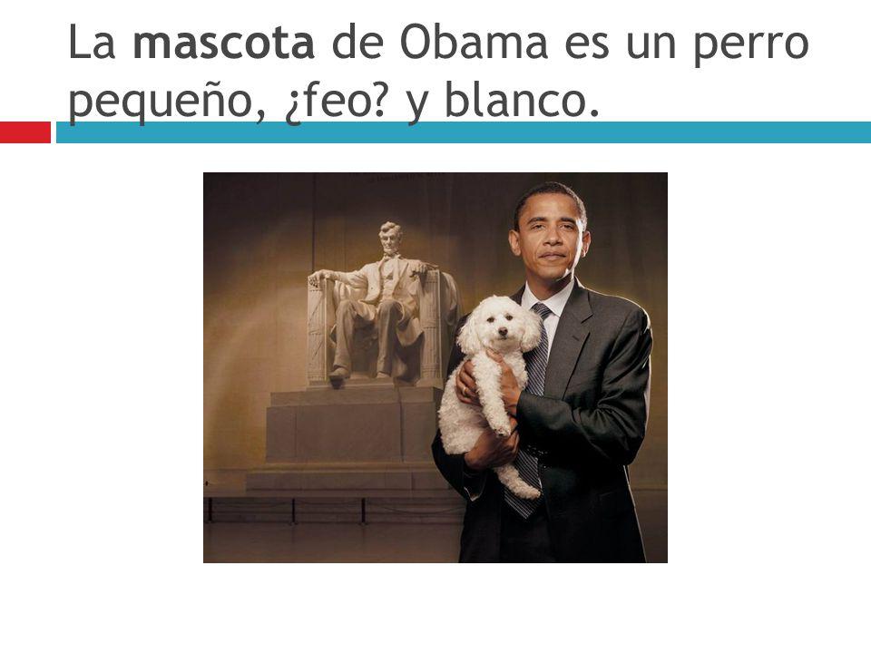 La mascota de Obama es un perro pequeño, ¿feo y blanco.
