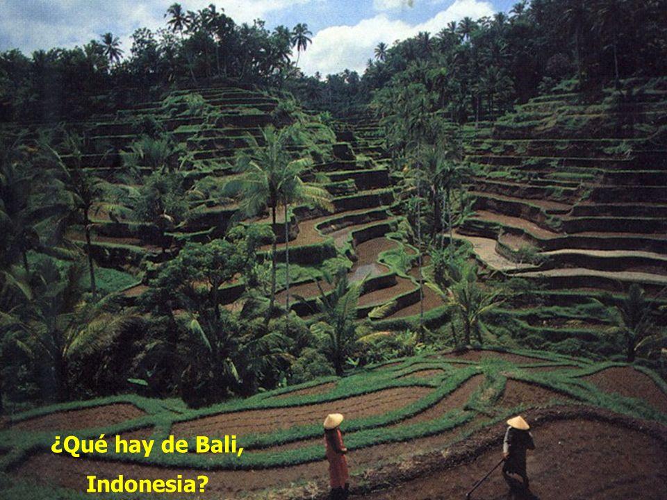 ¿Qué hay de Bali, Indonesia