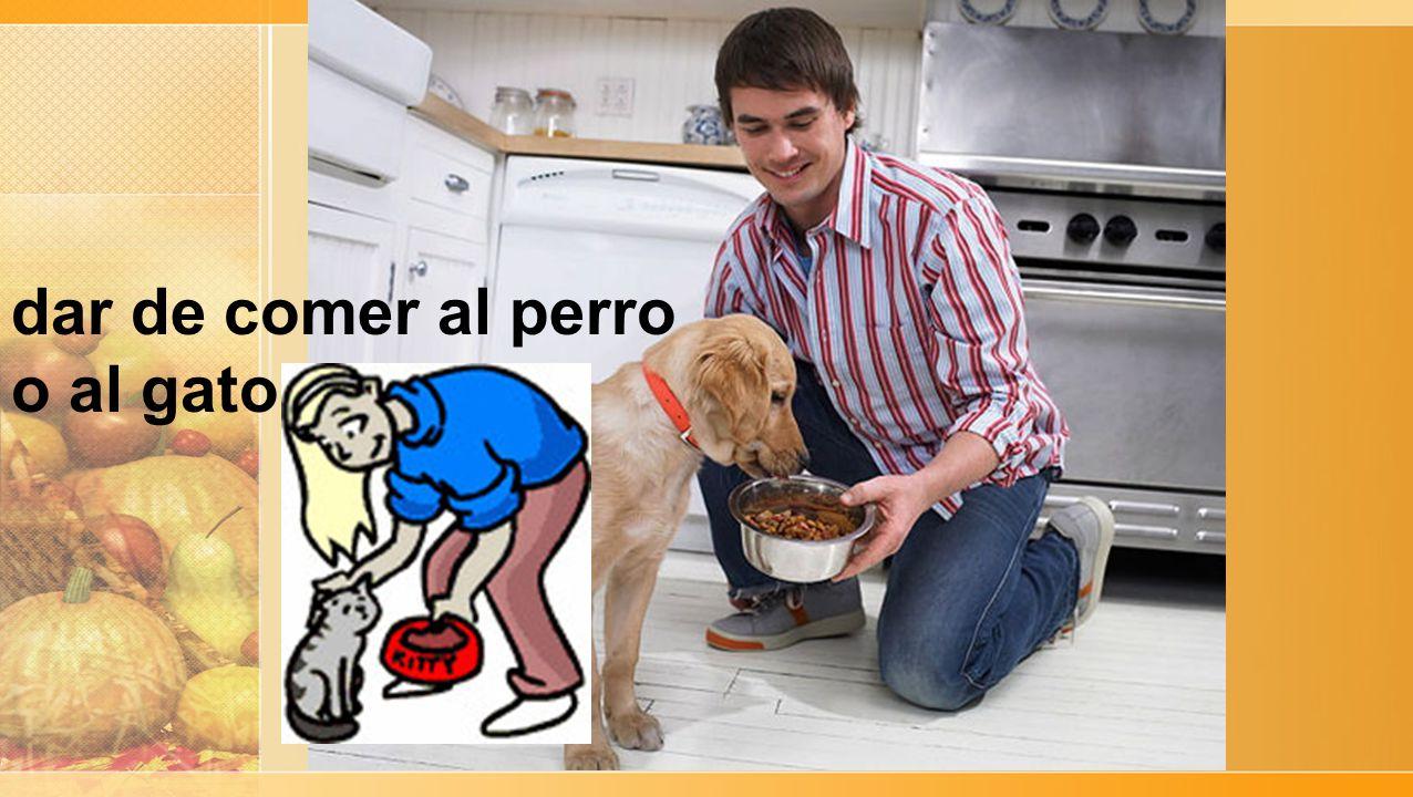 dar de comer al perro o al gato