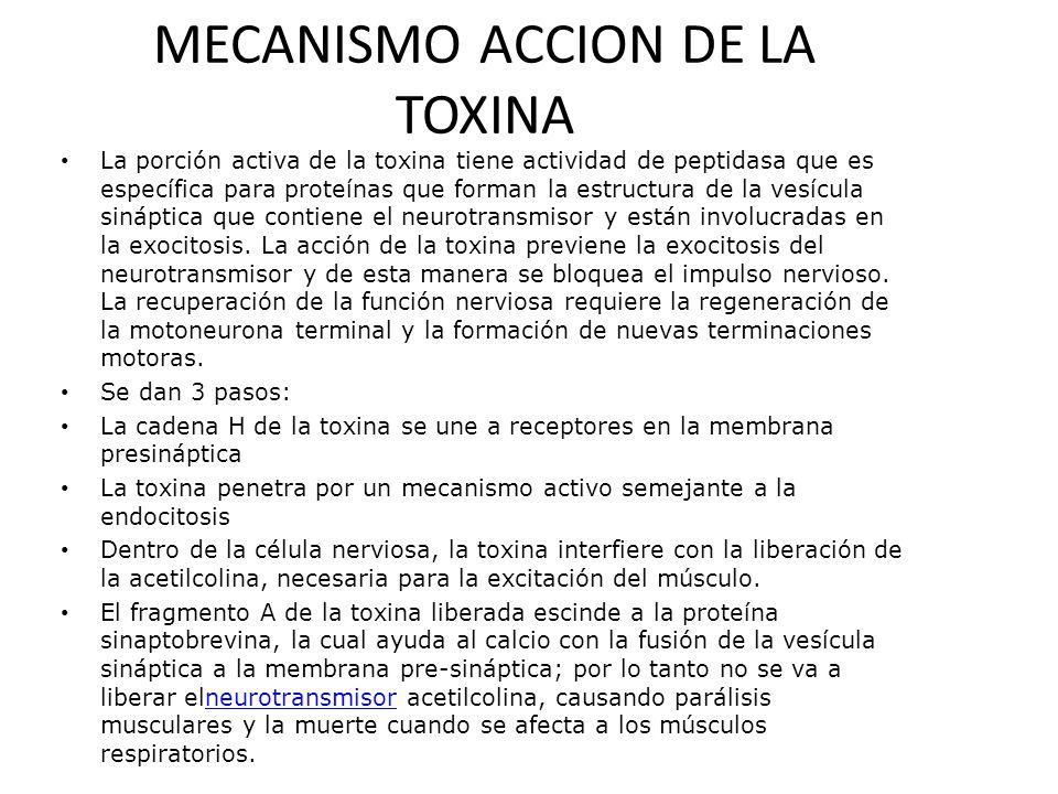 MECANISMO ACCION DE LA TOXINA