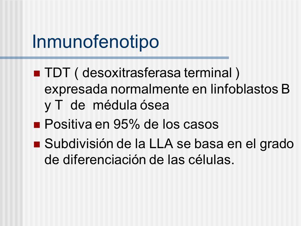 Inmunofenotipo TDT ( desoxitrasferasa terminal ) expresada normalmente en linfoblastos B y T de médula ósea.