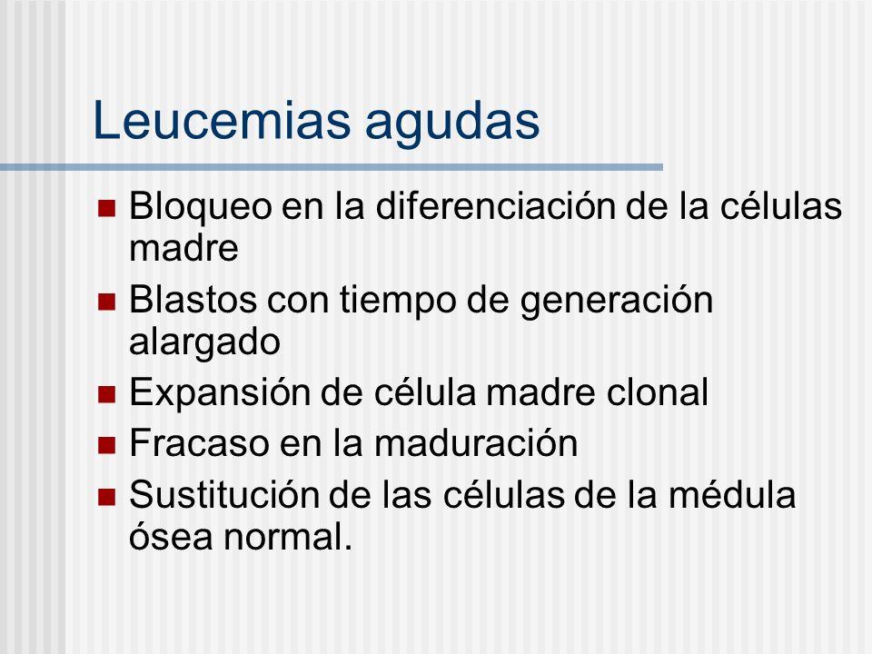 Leucemias agudas Bloqueo en la diferenciación de la células madre