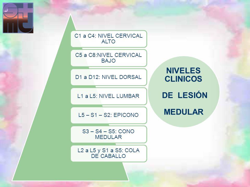 NIVELES CLINICOS DE LESIÓN MEDULAR
