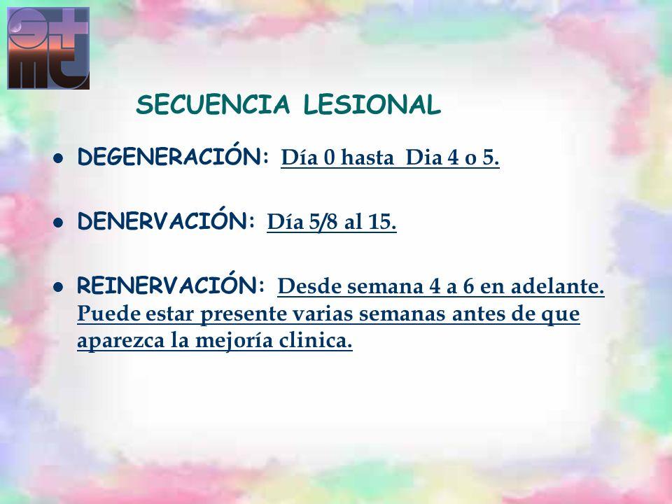 SECUENCIA LESIONAL DEGENERACIÓN: Día 0 hasta Dia 4 o 5.