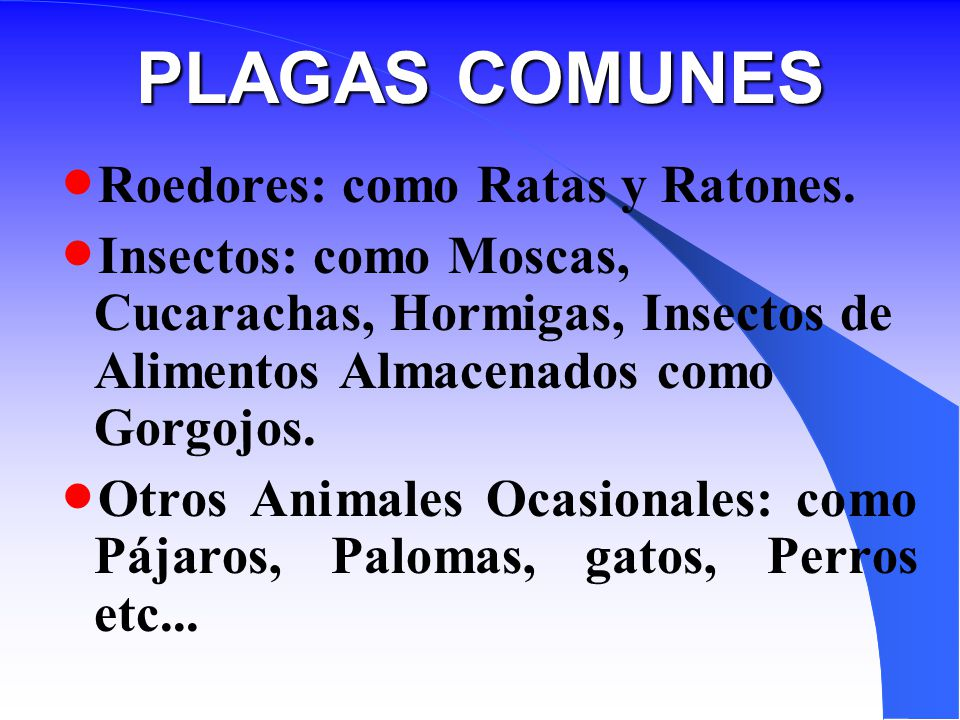 PLAGAS COMUNES Roedores: como Ratas y Ratones.