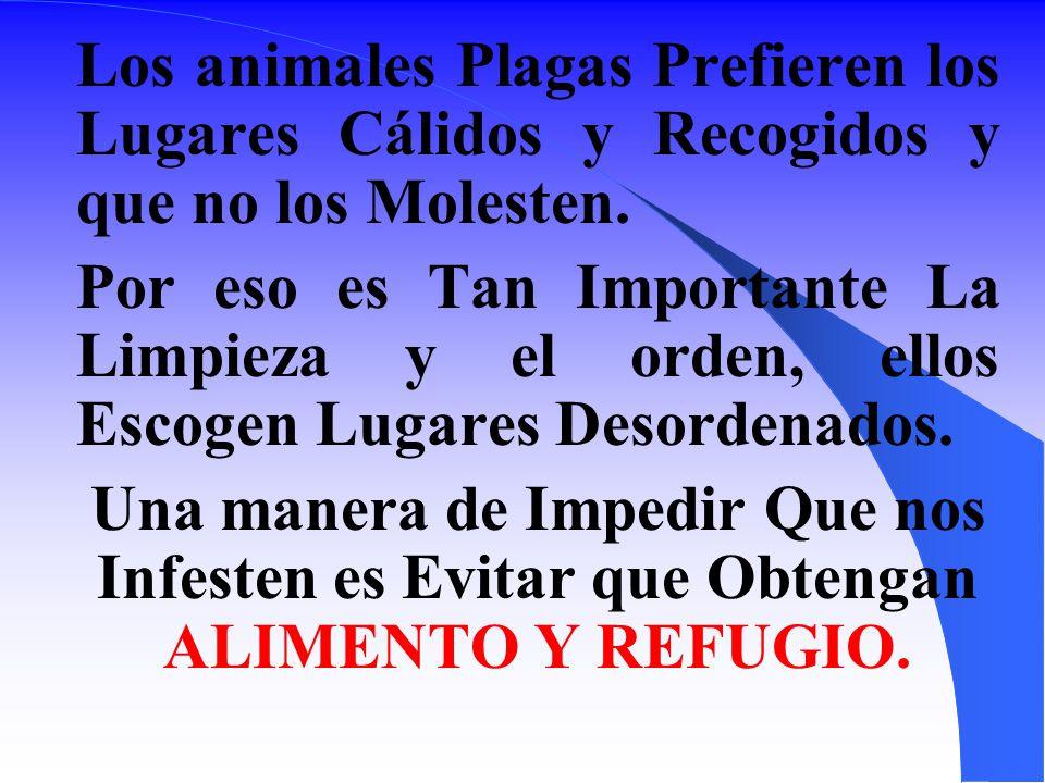Los animales Plagas Prefieren los Lugares Cálidos y Recogidos y que no los Molesten.