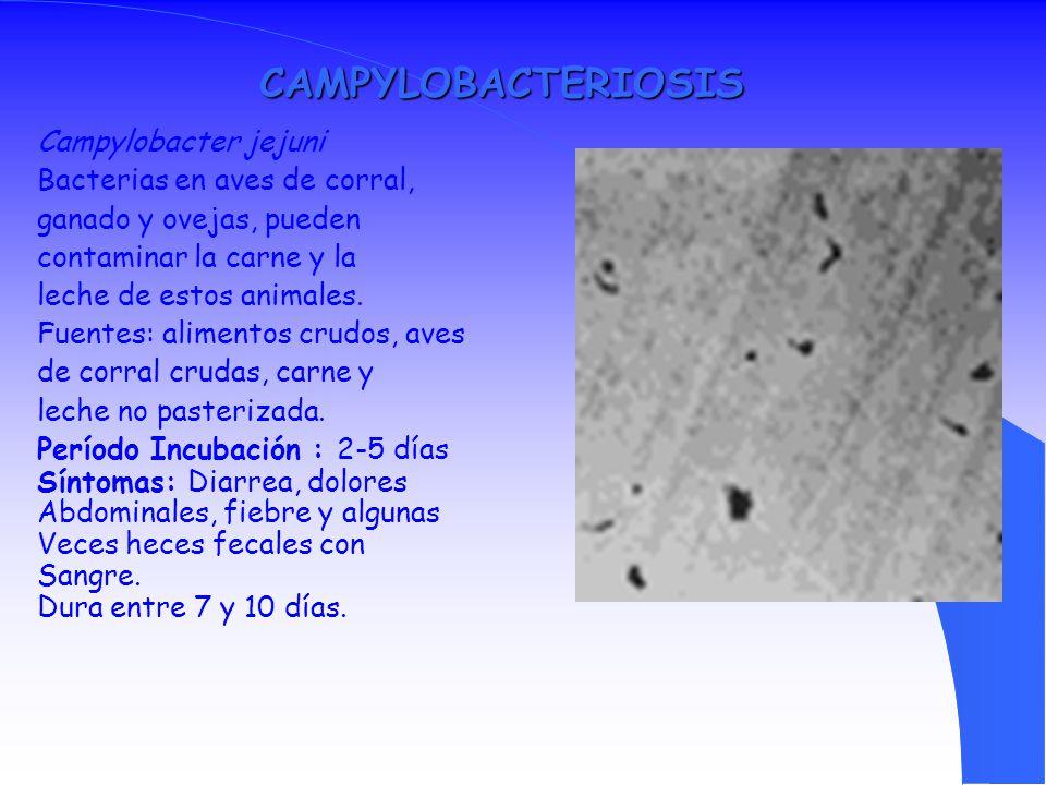 CAMPYLOBACTERIOSIS Campylobacter jejuni Bacterias en aves de corral,