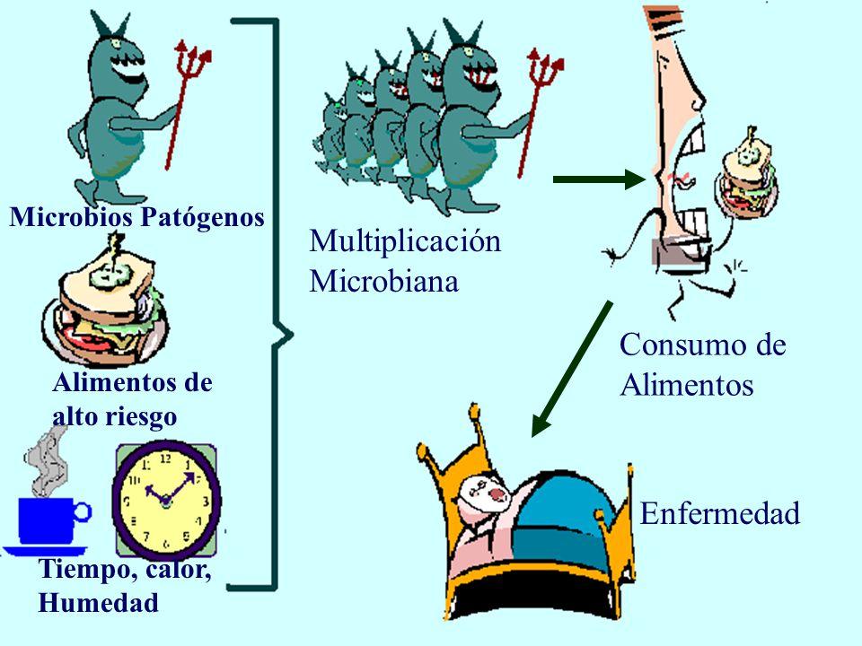Multiplicación Microbiana Consumo de Alimentos Enfermedad