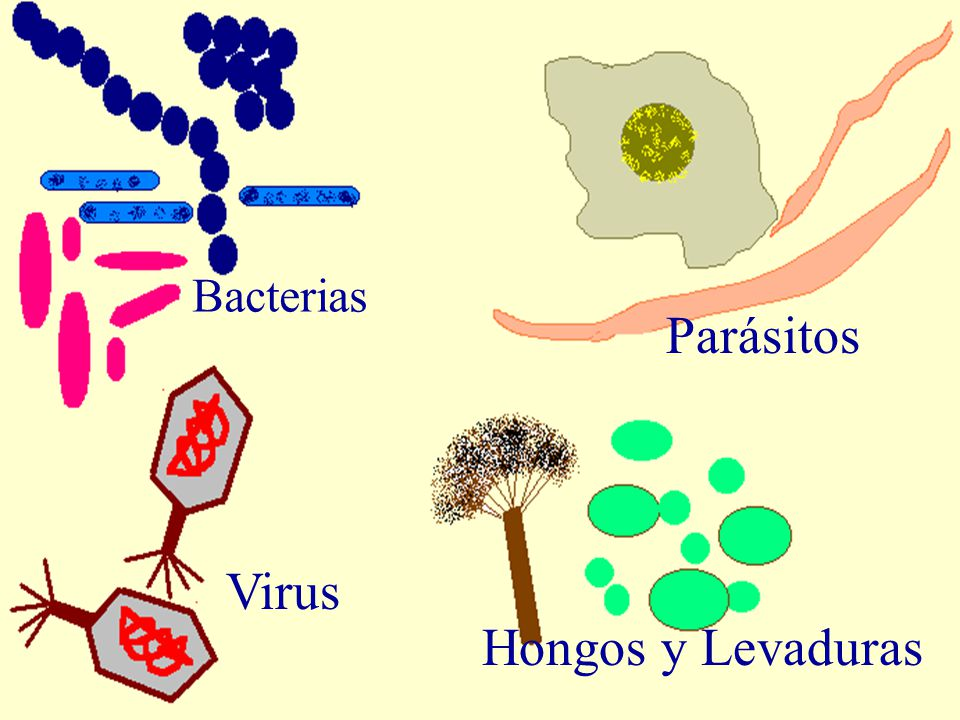 Bacterias Parásitos Virus Hongos y Levaduras