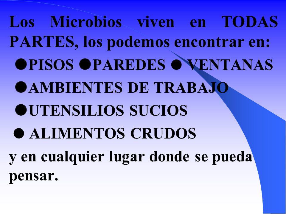 Los Microbios viven en TODAS PARTES, los podemos encontrar en: