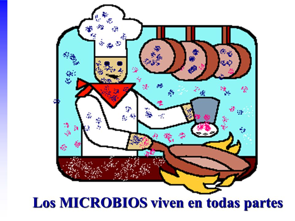 Los MICROBIOS viven en todas partes