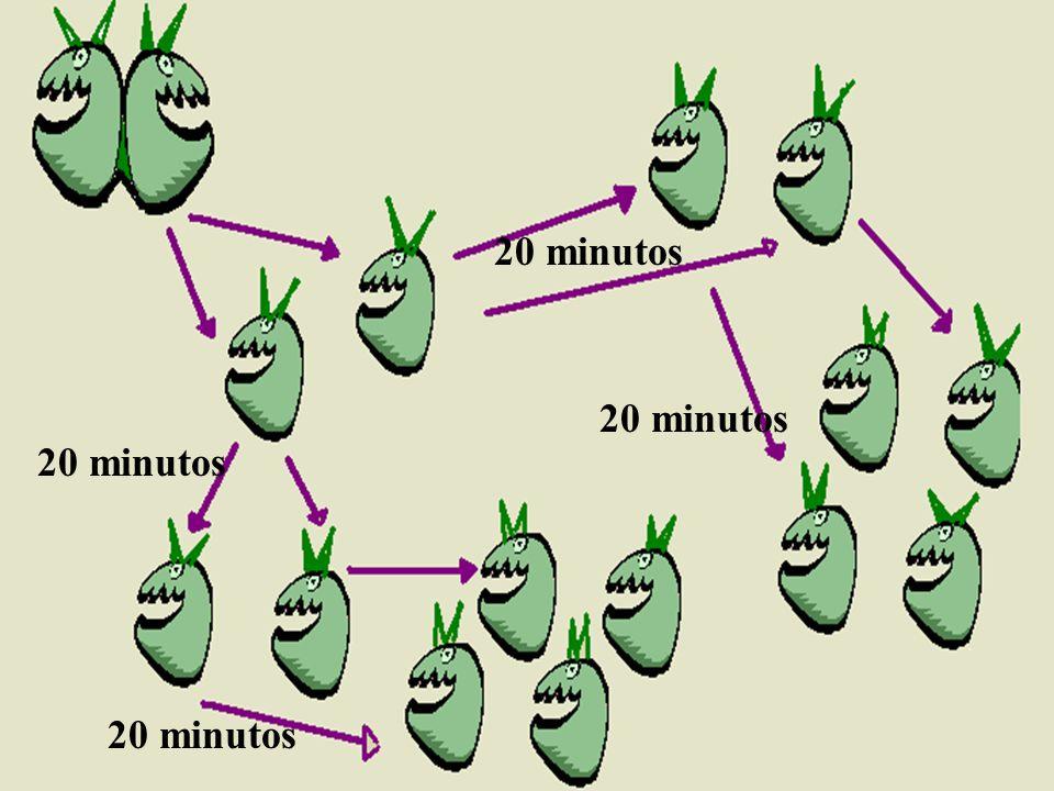 20 minutos 20 minutos 20 minutos 20 minutos