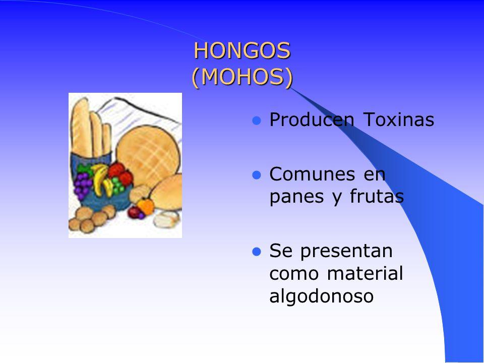 HONGOS (MOHOS) Producen Toxinas Comunes en panes y frutas