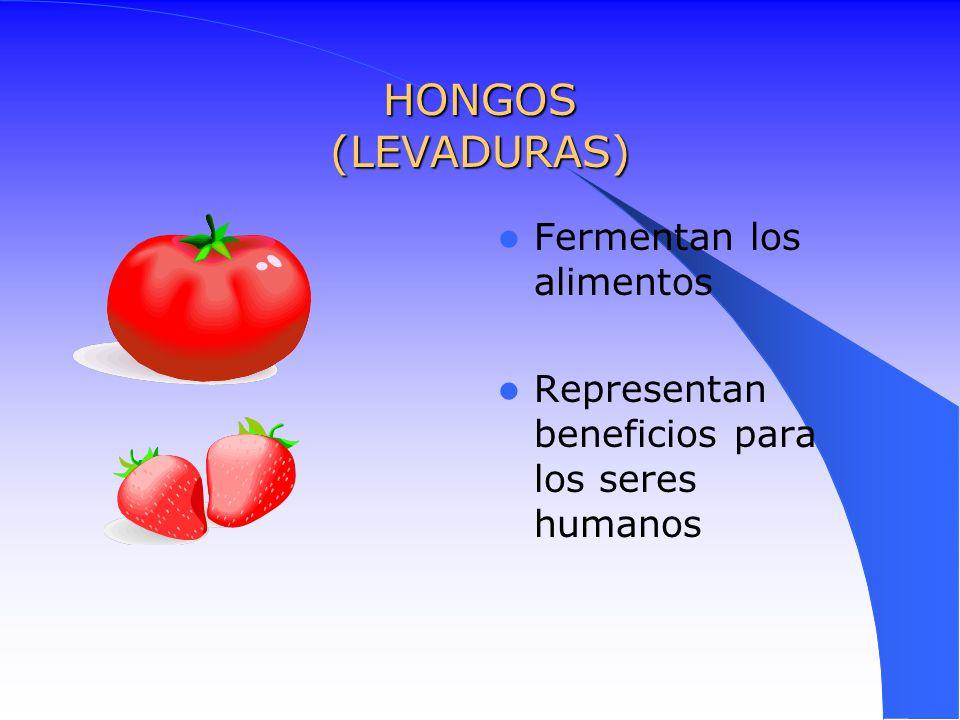 HONGOS (LEVADURAS) Fermentan los alimentos