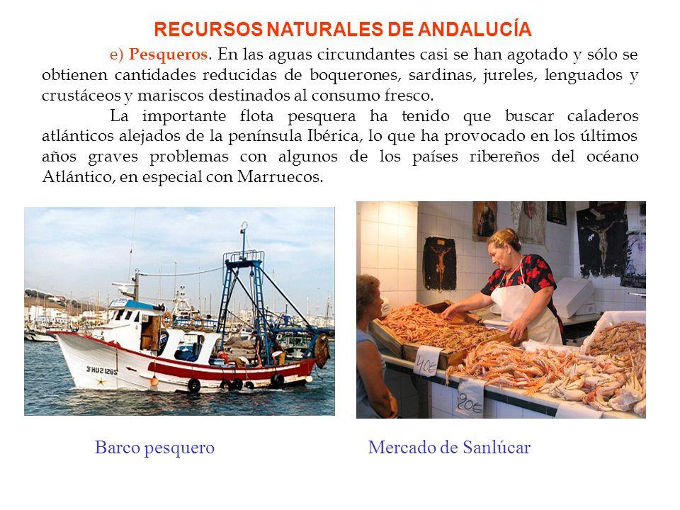 RECURSOS NATURALES DE ANDALUCÍA