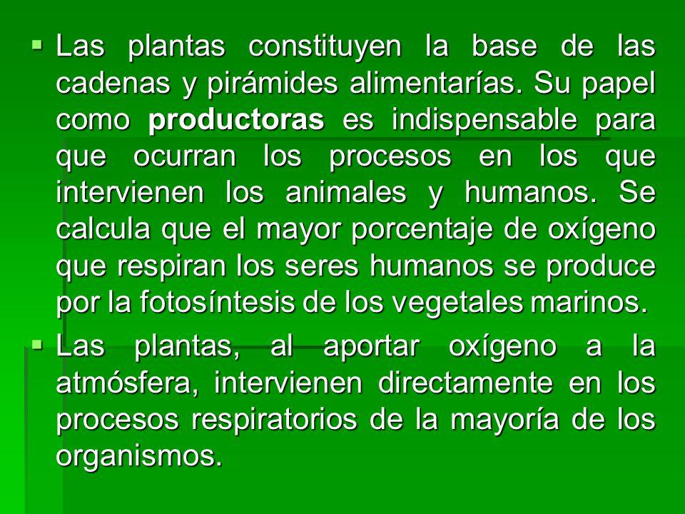 Las plantas constituyen la base de las cadenas y pirámides alimentarías. Su papel como productoras es indispensable para que ocurran los procesos en los que intervienen los animales y humanos. Se calcula que el mayor porcentaje de oxígeno que respiran los seres humanos se produce por la fotosíntesis de los vegetales marinos.