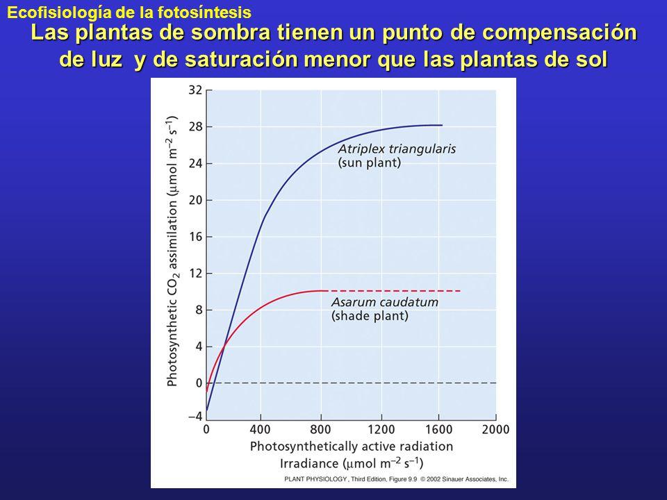 Las plantas de sombra tienen un punto de compensación de luz y de saturación menor que las plantas de sol