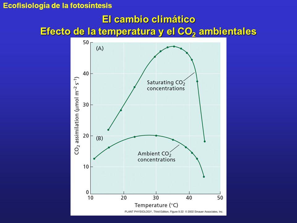 El cambio climático Efecto de la temperatura y el CO2 ambientales