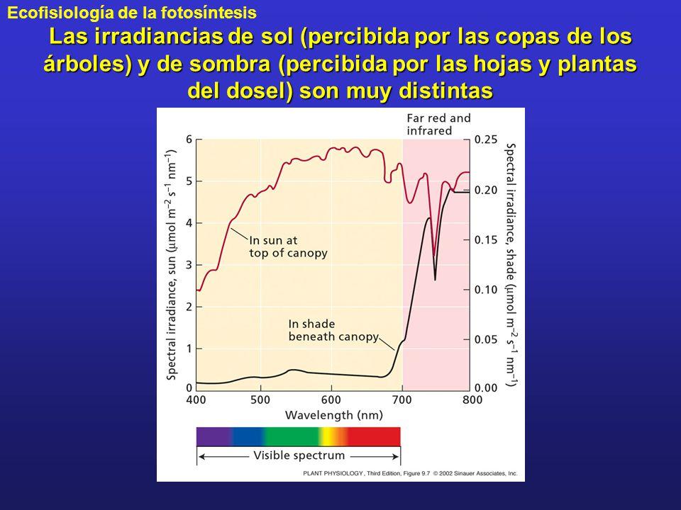 Las irradiancias de sol (percibida por las copas de los árboles) y de sombra (percibida por las hojas y plantas del dosel) son muy distintas