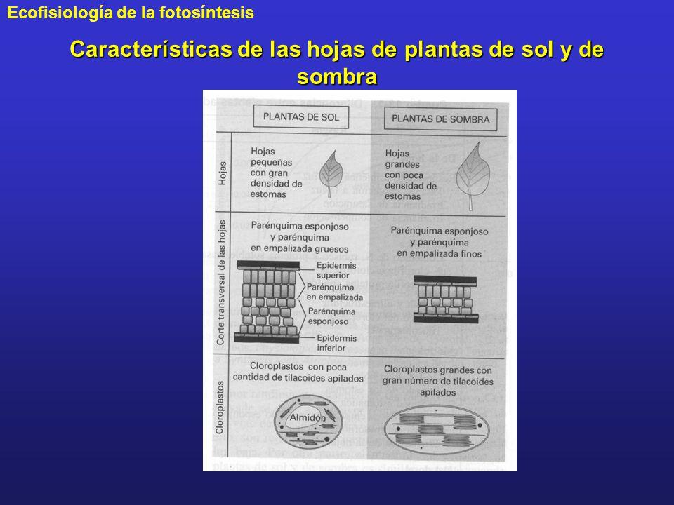 Características de las hojas de plantas de sol y de sombra