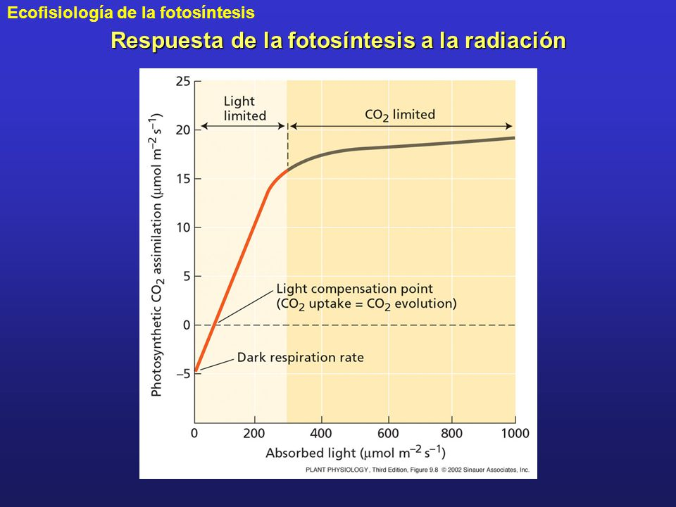 Respuesta de la fotosíntesis a la radiación
