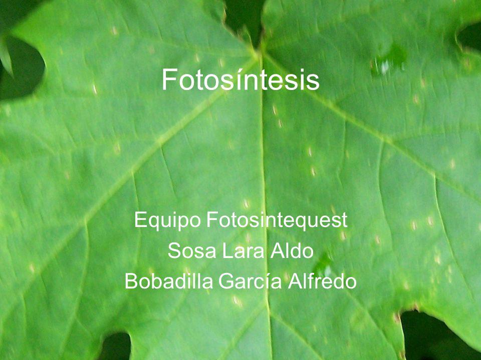 Equipo Fotosintequest Sosa Lara Aldo Bobadilla García Alfredo