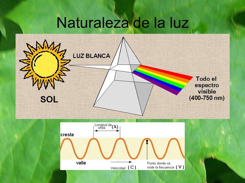 Naturaleza de la luz
