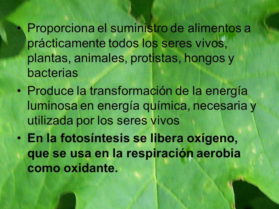 Proporciona el suministro de alimentos a prácticamente todos los seres vivos, plantas, animales, protistas, hongos y bacterias