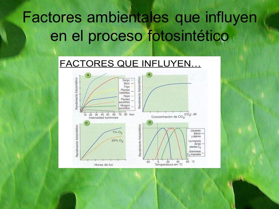 Factores ambientales que influyen en el proceso fotosintético