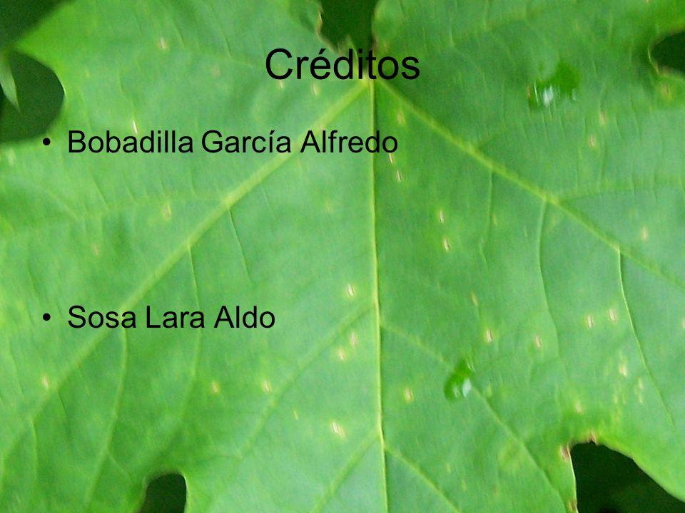 Créditos Bobadilla García Alfredo Sosa Lara Aldo