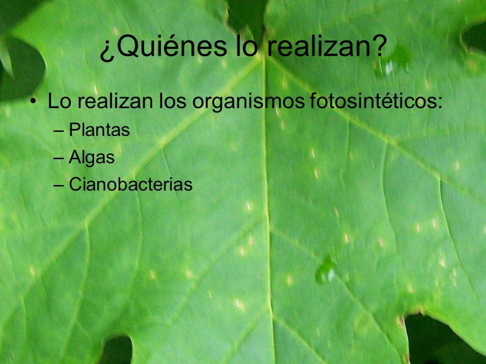 ¿Quiénes lo realizan Lo realizan los organismos fotosintéticos: