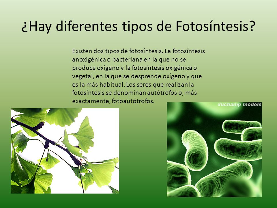 ¿Hay diferentes tipos de Fotosíntesis