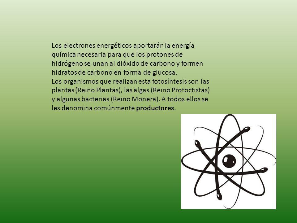 Los electrones energéticos aportarán la energía química necesaria para que los protones de hidrógeno se unan al dióxido de carbono y formen hidratos de carbono en forma de glucosa.