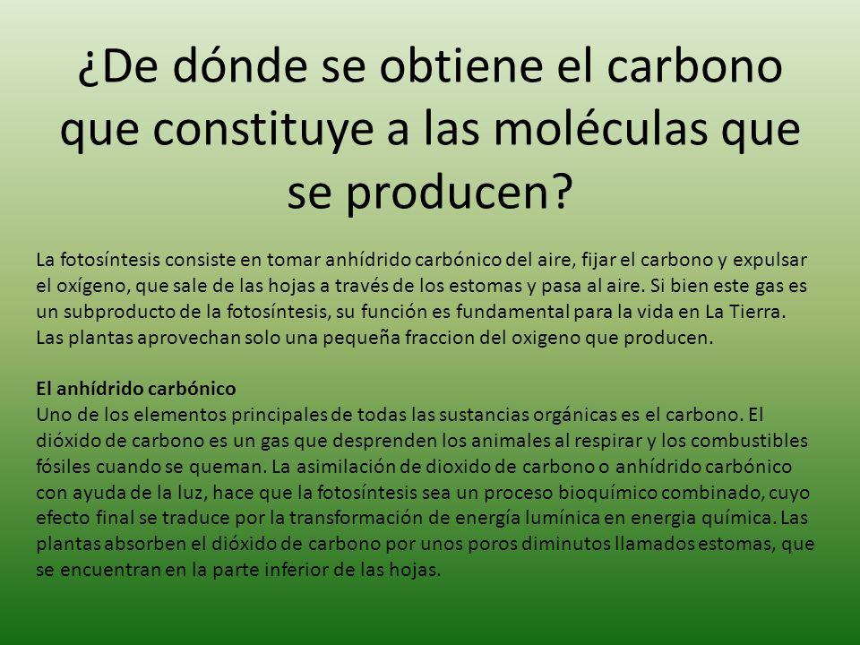 ¿De dónde se obtiene el carbono que constituye a las moléculas que se producen