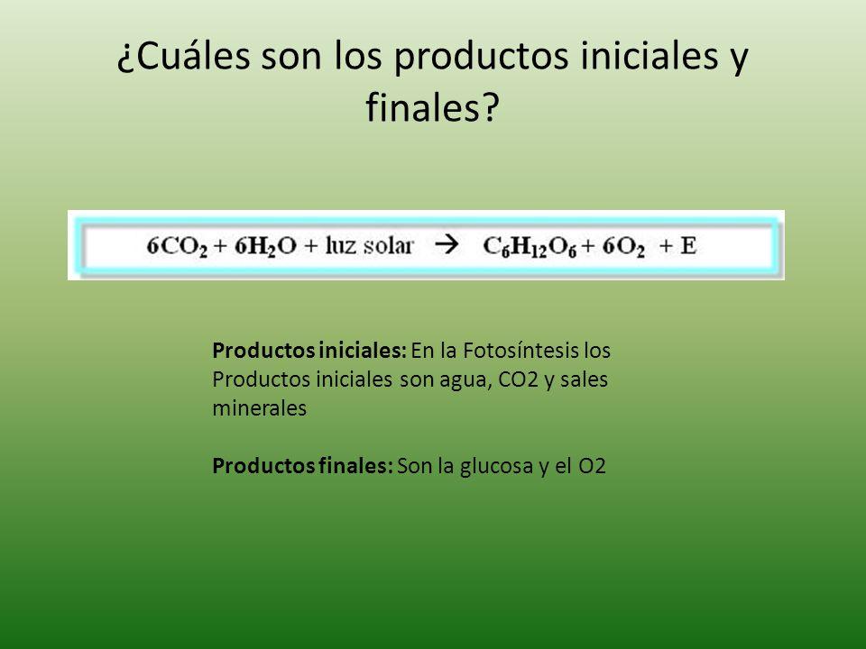 ¿Cuáles son los productos iniciales y finales