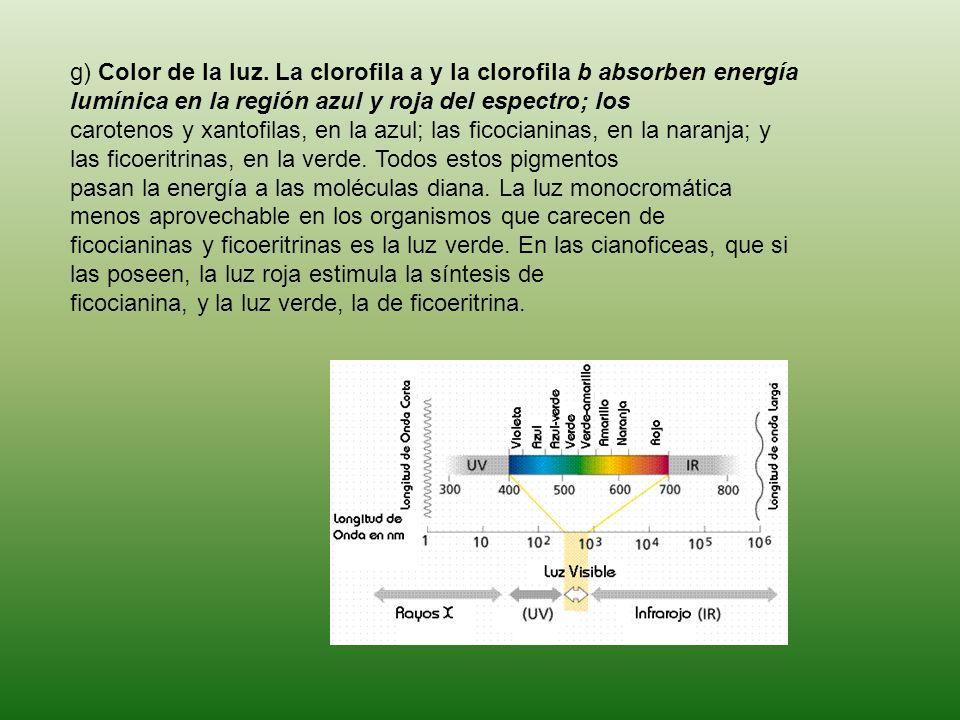 g) Color de la luz. La clorofila a y la clorofila b absorben energía lumínica en la región azul y roja del espectro; los