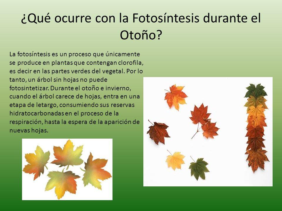 Fotos ntesis ppt descargar for Arboles que no se le caen las hojas en invierno