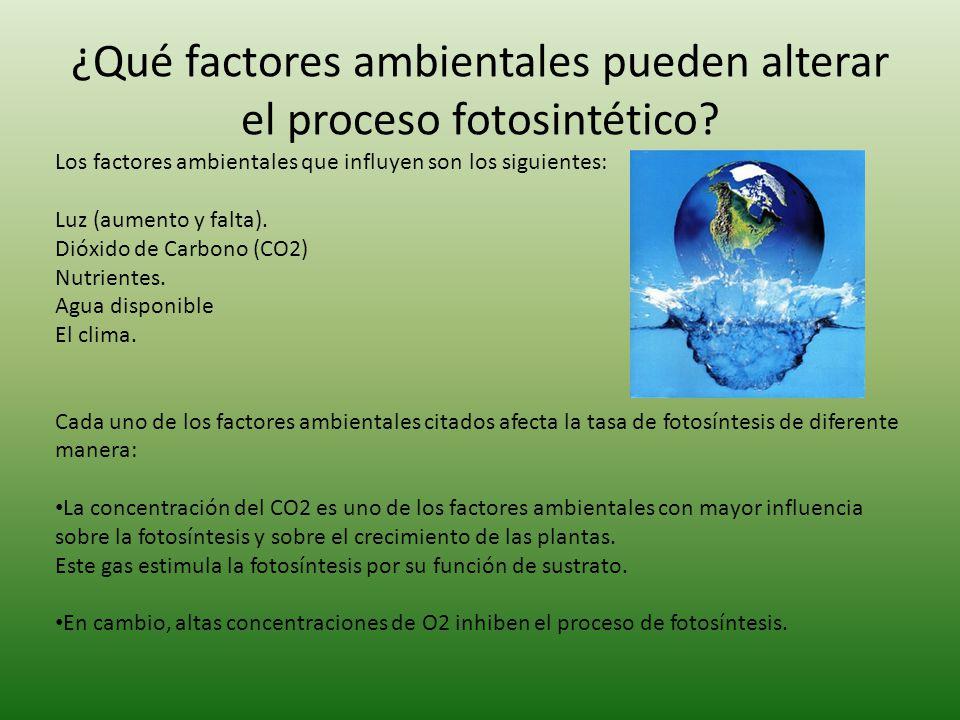 ¿Qué factores ambientales pueden alterar el proceso fotosintético