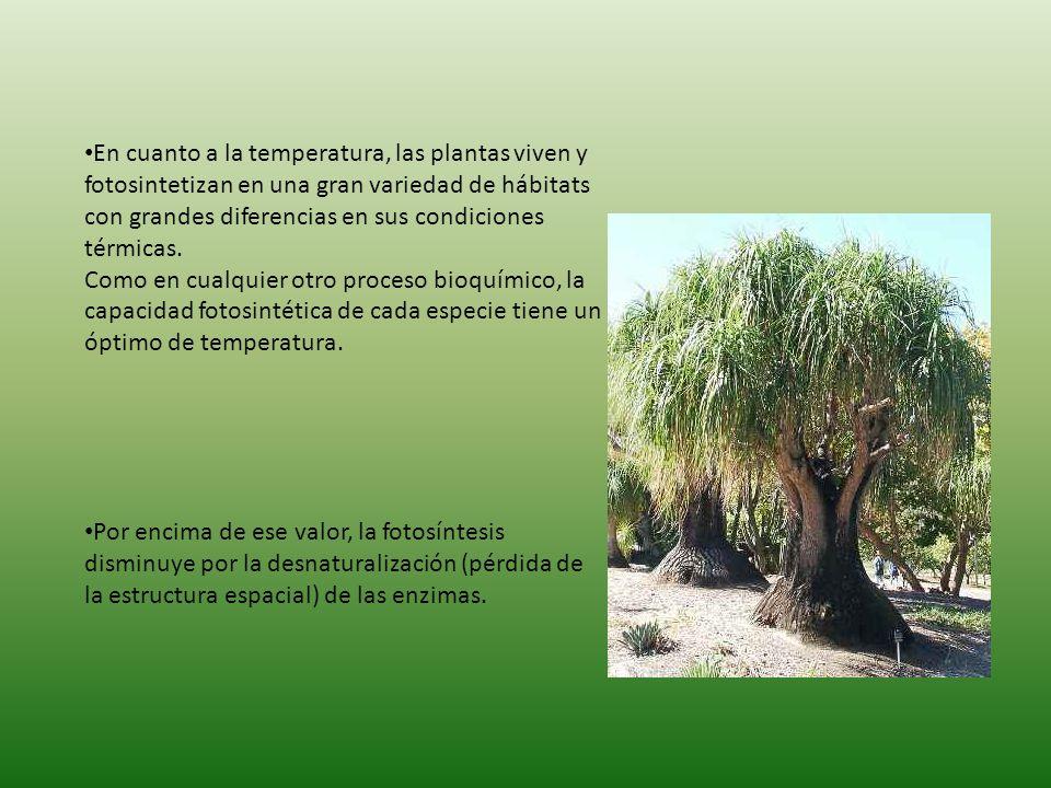 En cuanto a la temperatura, las plantas viven y fotosintetizan en una gran variedad de hábitats con grandes diferencias en sus condiciones térmicas. Como en cualquier otro proceso bioquímico, la capacidad fotosintética de cada especie tiene un óptimo de temperatura.