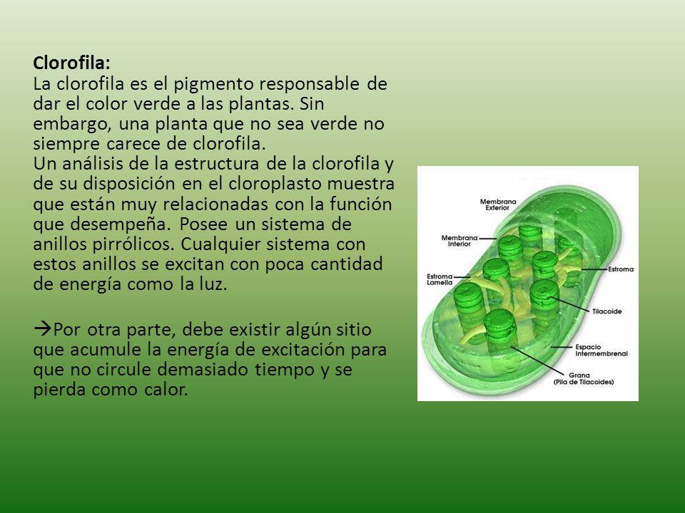 Clorofila: La clorofila es el pigmento responsable de dar el color verde a las plantas.