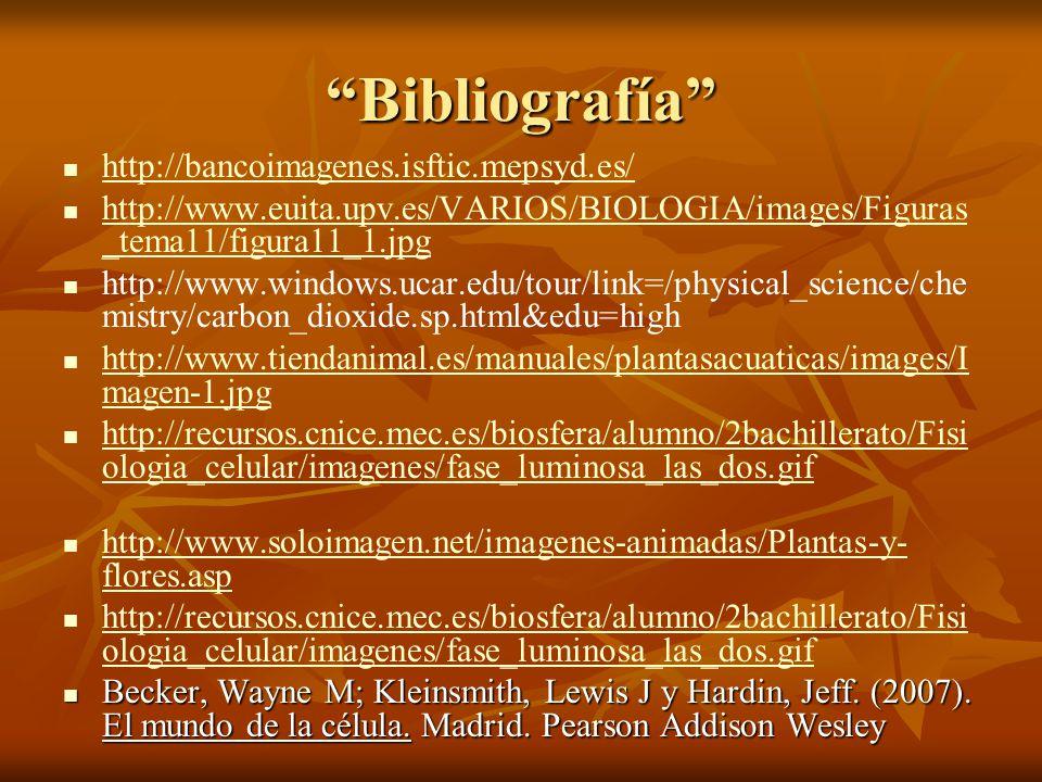 Bibliografía http://bancoimagenes.isftic.mepsyd.es/