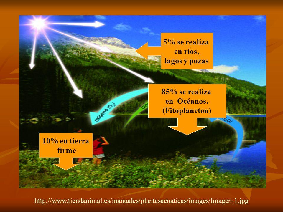 5% se realiza en ríos, lagos y pozas 85% se realiza en Océanos.