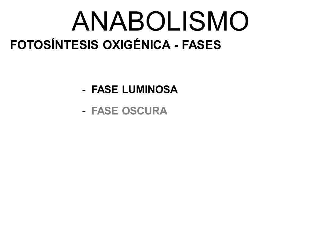 ANABOLISMO FOTOSÍNTESIS OXIGÉNICA - FASES FASE LUMINOSA FASE OSCURA