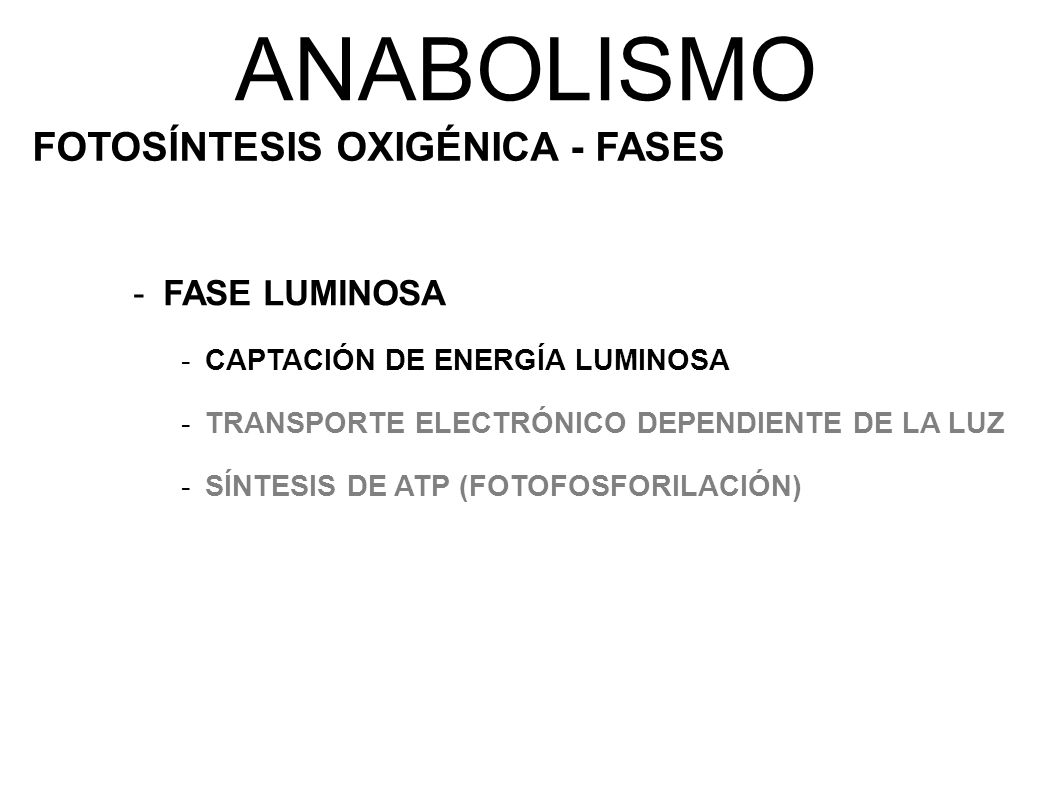 ANABOLISMO FOTOSÍNTESIS OXIGÉNICA - FASES FASE LUMINOSA