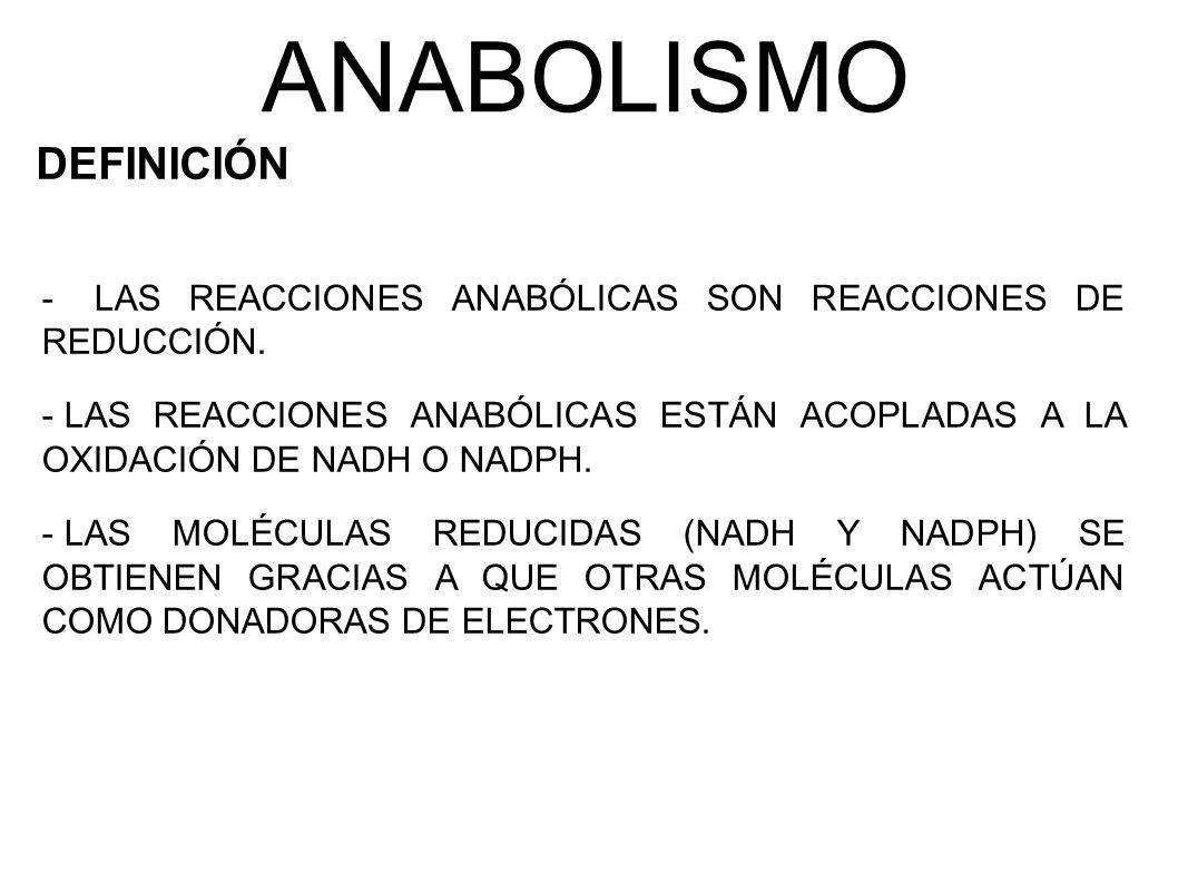 ANABOLISMO DEFINICIÓN