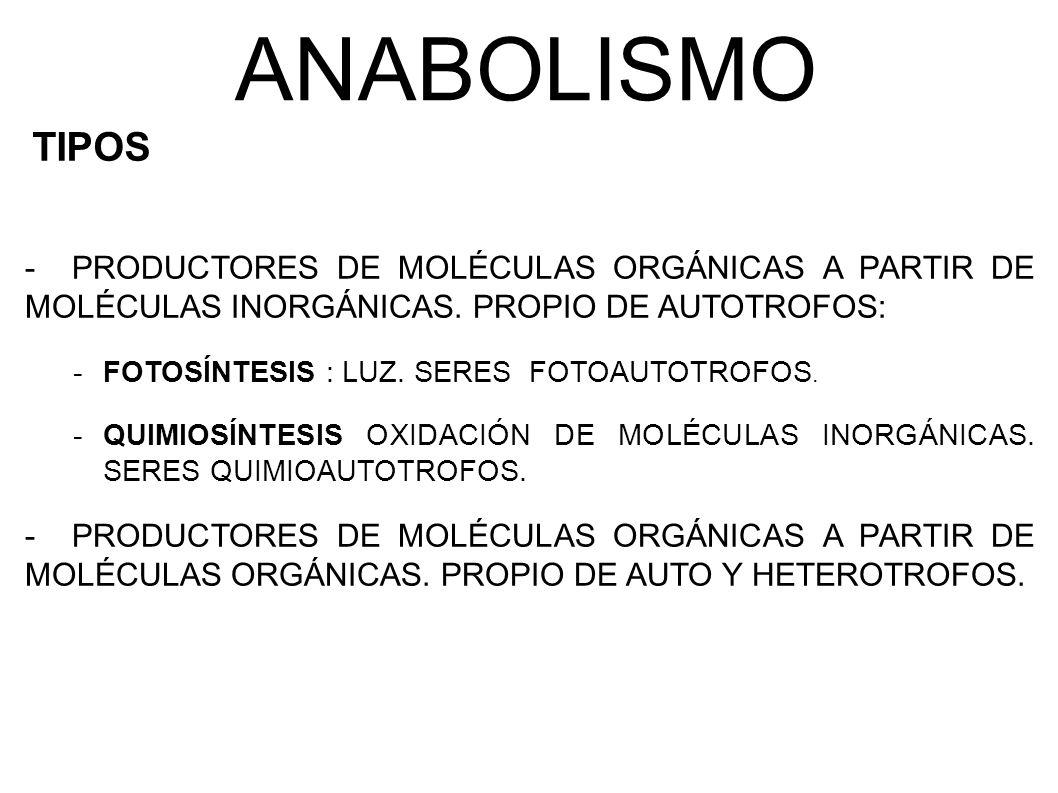 ANABOLISMO TIPOS. PRODUCTORES DE MOLÉCULAS ORGÁNICAS A PARTIR DE MOLÉCULAS INORGÁNICAS. PROPIO DE AUTOTROFOS: