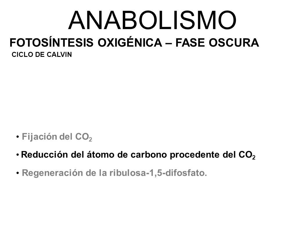 ANABOLISMO FOTOSÍNTESIS OXIGÉNICA – FASE OSCURA Fijación del CO2