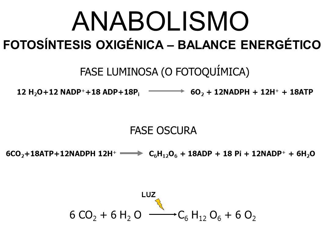 ANABOLISMO FOTOSÍNTESIS OXIGÉNICA – BALANCE ENERGÉTICO